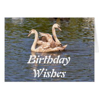 Tarjeta de cumpleaños: Cisnes juveniles
