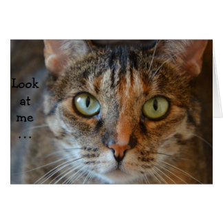 Tarjeta de cumpleaños con el gato: Míreme…