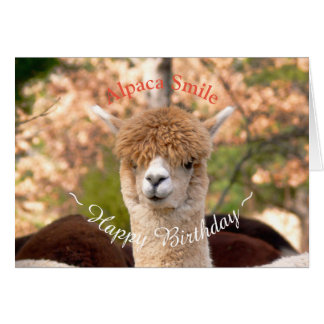 Tarjeta de cumpleaños de la belleza de la alpaca