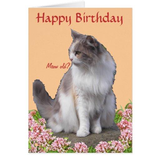 Tarjeta de cumpleaños de la foto del gato
