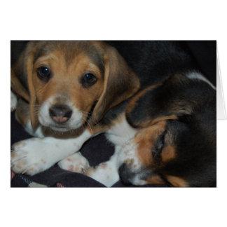 Tarjeta de cumpleaños de los perritos del beagle