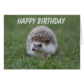 tarjeta de cumpleaños del erizo