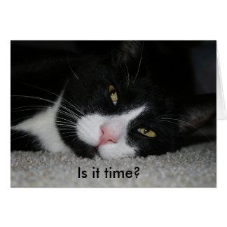 Tarjeta de cumpleaños divertida con el gato: ¿Es