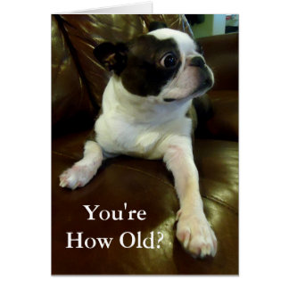 Tarjeta de cumpleaños divertida de Boston Terrier