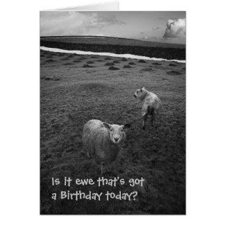 Tarjeta de cumpleaños inquisitiva de las ovejas