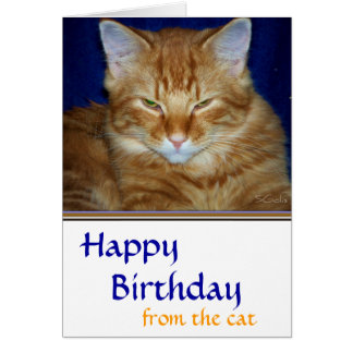 Tarjeta de cumpleaños malhumorada del gato de
