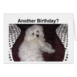 Tarjeta de cumpleaños maltesa del humor para