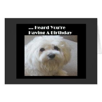 Tarjeta de cumpleaños maltesa del humor para sobre