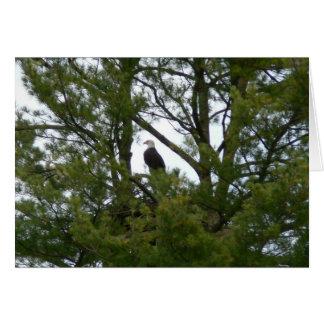Tarjeta de Eagle calvo