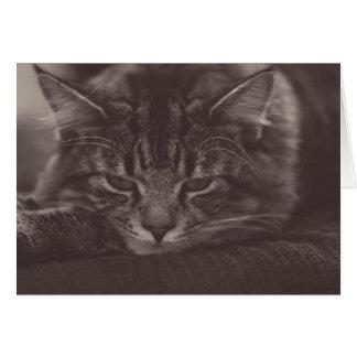Tarjeta de felicitación adorable del gatito