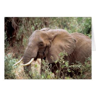 Tarjeta de felicitación africana del elefante de