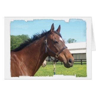 Tarjeta de felicitación árabe alerta del caballo