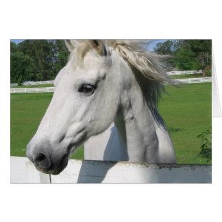 Tarjeta de felicitación árabe blanca del caballo