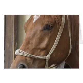 Tarjeta de felicitación árabe de los caballos