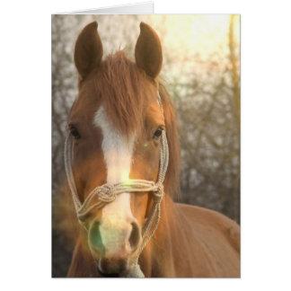 Tarjeta de felicitación árabe del caballo de la ca