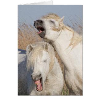 Tarjeta de felicitación blanca del caballo del