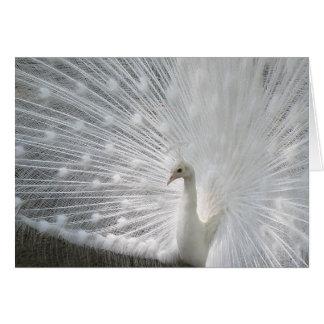Tarjeta de felicitación blanca del pavo real