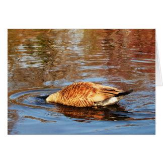 Tarjeta de felicitación canadiense de los gansos