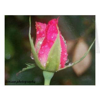 Tarjeta de felicitación:  Capullo de rosa rosado
