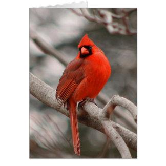 Tarjeta de felicitación cardinal masculina