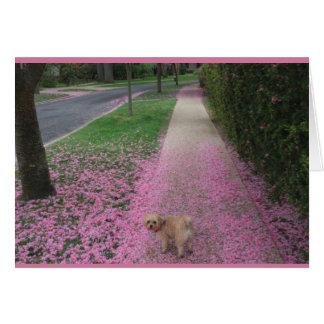 Tarjeta de felicitación con la flor de cerezo con