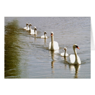 Tarjeta de felicitación de la familia del cisne