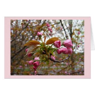 Tarjeta de felicitación de la flor de cerezo tarjeta de felicitación