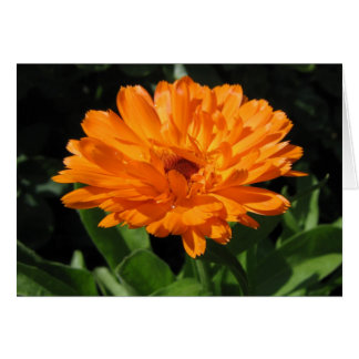Tarjeta de felicitación de la flor del Calendula