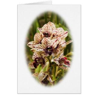 Tarjeta de felicitación de la orquídea de Jaguar