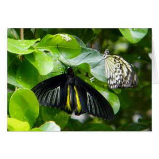 Tarjeta de felicitación de las mariposas