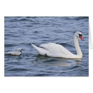 Tarjeta de felicitación de los cisnes