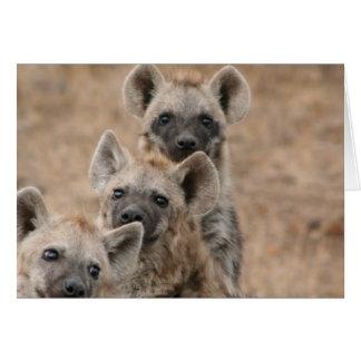 Tarjeta de felicitación de los Hyenas