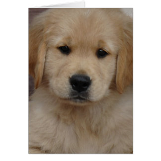 Tarjeta de felicitación de oro del perrito