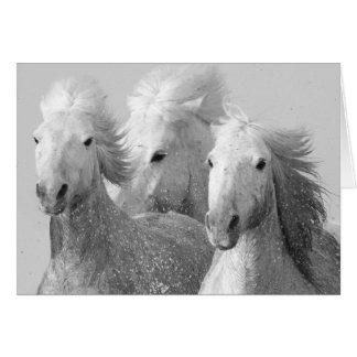 Tarjeta de felicitación de tres caballos blancos