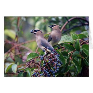 Tarjeta de felicitación del almuerzo del pájaro