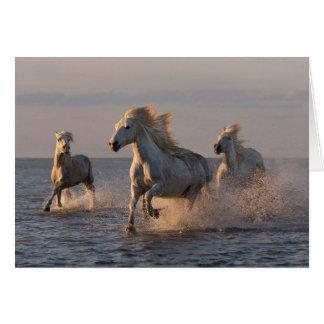 Tarjeta de felicitación del caballo -