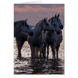 Tarjeta de felicitación del caballo - cuatro