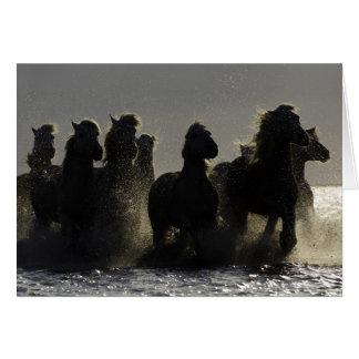 Tarjeta de felicitación del caballo de los