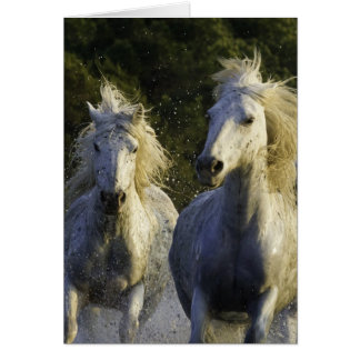 Tarjeta de felicitación del caballo del aerosol de