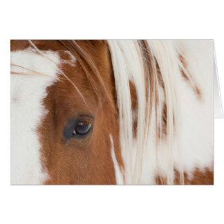 Tarjeta de felicitación del caballo del ojo del
