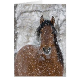 Tarjeta de felicitación del caballo del semental