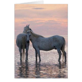Tarjeta de felicitación del caballo - dos amigos