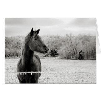 Tarjeta de felicitación del caballo negro y blanco