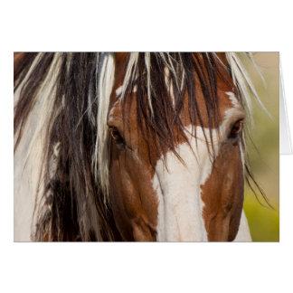 Tarjeta de felicitación del caballo salvaje de los