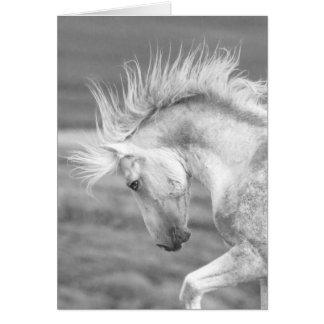Tarjeta de felicitación del caballo salvaje del