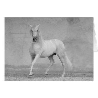Tarjeta de felicitación del caballo - semental