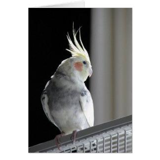 Tarjeta de felicitación del Cockatiel