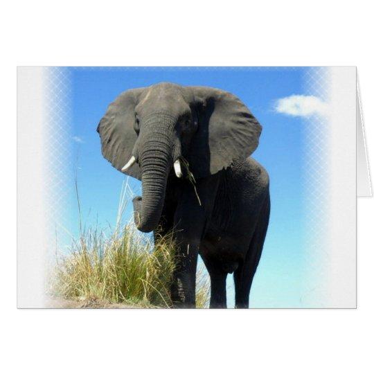Tarjeta de felicitación del elefante africano