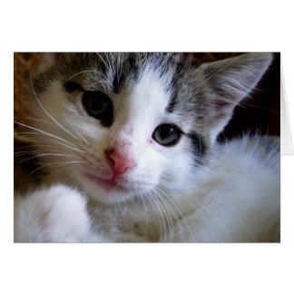 Tarjeta de felicitación del gatito