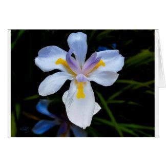 Tarjeta de felicitación del iris que duele #2